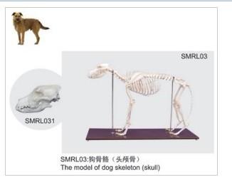 马的骨骼结构图及名称