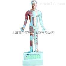 电动语言十四电动针灸模型|中医专科训练模型