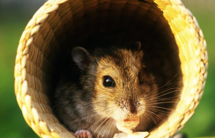 小动物探头手机壁纸
