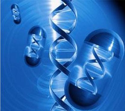 正文    慢病毒载体(lentivectors)如今已经成功用于基因疗法模型中