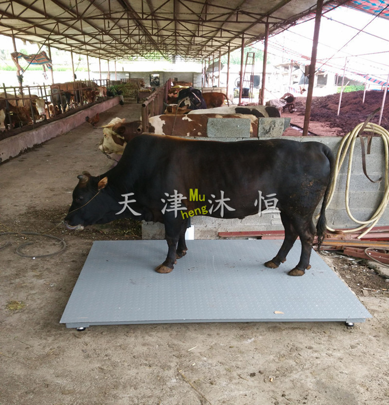 四,牲畜称秤台结构: 双层结构全钢秤台或在pd型外框四角加装调整支脚