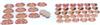 GD/A30002男性躯干断层解剖横切面模型