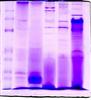 质谱鉴定组学技术服务